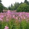 Beautiful wild blooms for every season